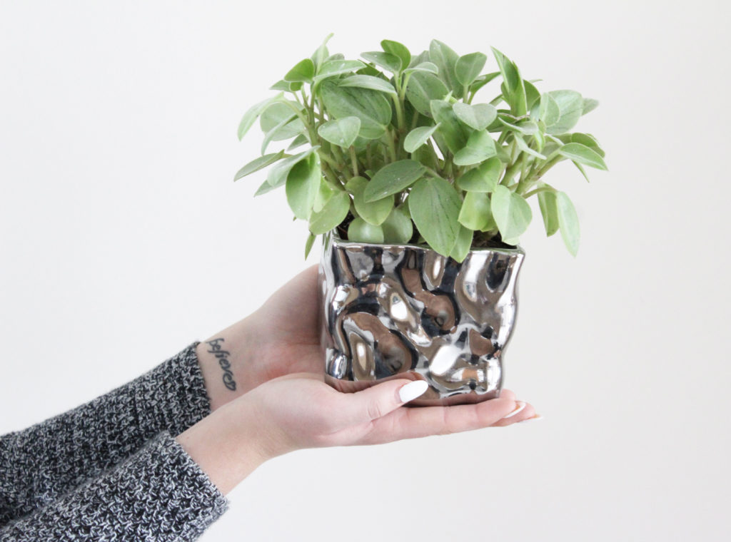 How to keep your indoor plants alive; tips and tricks to help keep the greenery in your house thriving! - www.nikkisplate.com