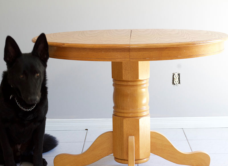 Pup presented next to the dining room table for scale!