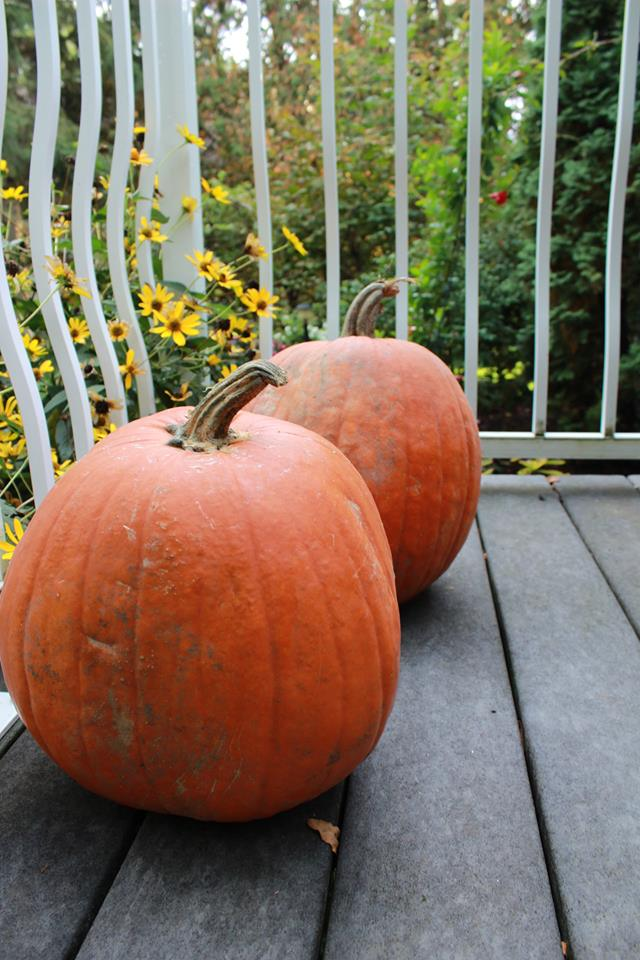 Orange pumpkins waiting on the porch, ready to carve with these cute pumpkin carving patterns and stencils.