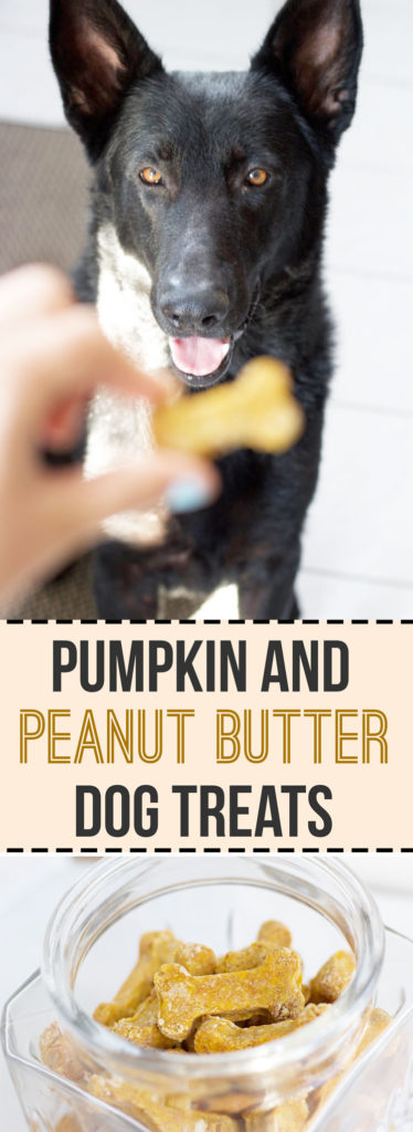 How to make homemade peanut butter and pumpkin dog treat! Safe and healthy treats for your furry best friend