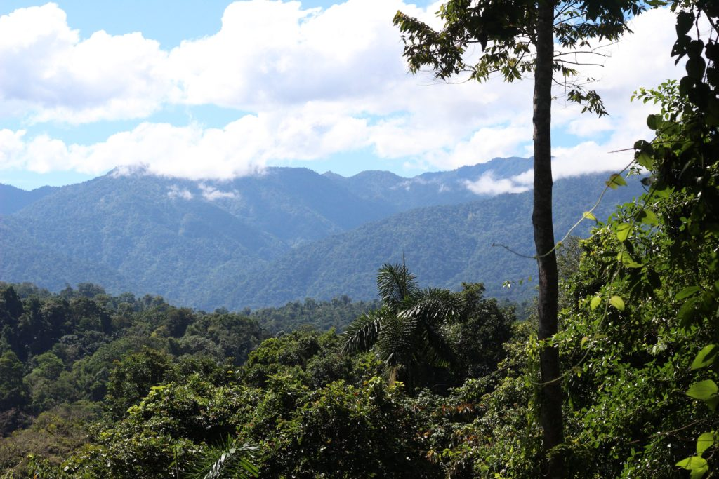 Costa Rica Travel Diary: Rainforest, butterfly sanctuary, tour, cruise, snakes, what to do, what not to do - Nikki's Plate