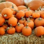 stay safe in a pumpkin patch Pinterest